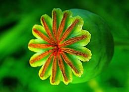 Plant 12